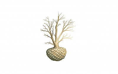Large trees and solitary shrubs are removed from the ground with root ball, which is wrapped in a burlap sack. The root ball with sack is extra protected with a wire basket. On average, the planting time runs from late September to May. For logistical reasons it is sometimes necessary to plant the tree outside this period. By placing your order in good time, these trees with root ball can be drip irrigated in the nursery during the planting season. This enables these trees to be planted after the month of May.