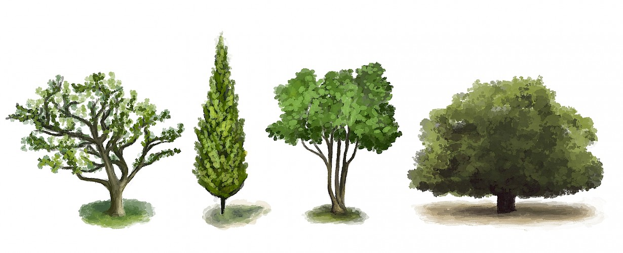 Every type of tree has its own natural growth habit, either a narrow or broader form, tall or short. However, the final form of the tree is not only determined by its natural growth habit. For certain types of tree, columnar and weeping varieties are cultivated. A multi-stemmed cultivated tree produces a very different look to a standard tree.   The desired final look is already a good indicator for the choice of form. In a small space, a columnar tree may be a good option, whereas outside a window or on a terrace, an attractive multi-stemmed tree could be planted.   All the different tree forms are explained at the bottom of this page.